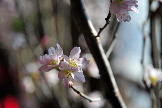 2009-0214-桜2