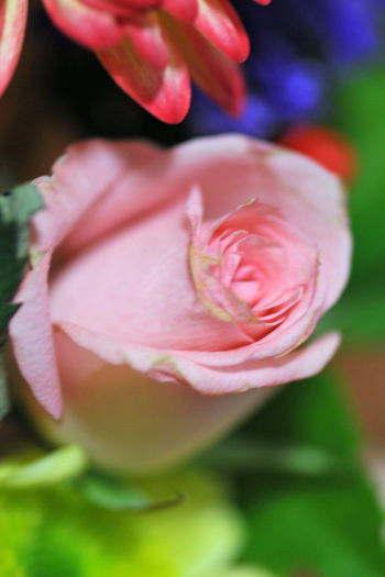 2009-0220-花