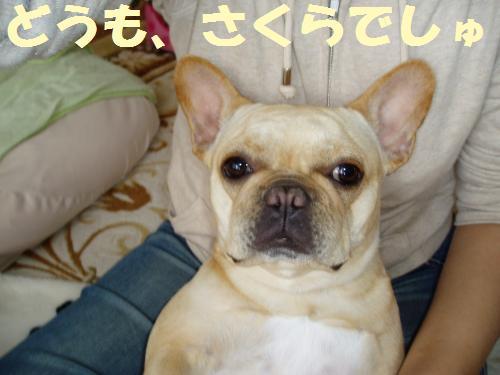 001_convert_20110527155642.jpg
