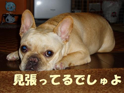 001_convert_20110601005151.jpg