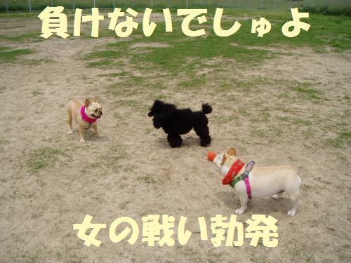 001_convert_20110604011627.jpg