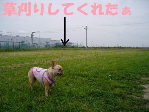 001_convert_20110610231922.jpg