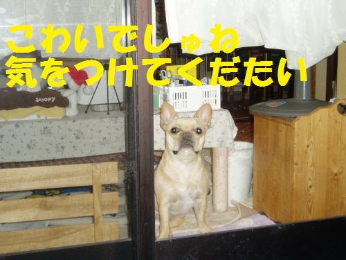 001_convert_20110719130020.jpg