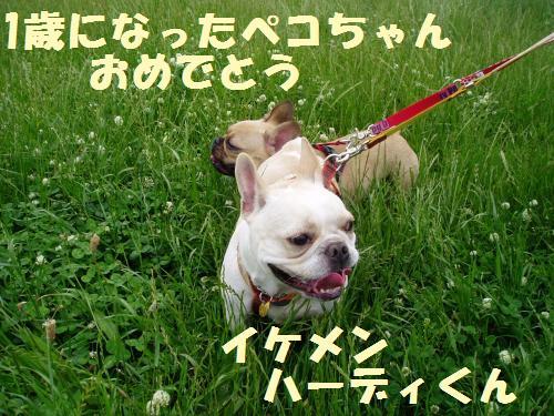 002_convert_20110606133319.jpg