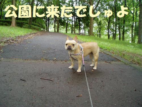 002_convert_20110725021134.jpg