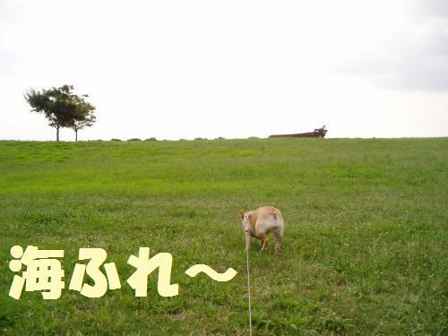 002_convert_20110730024115.jpg