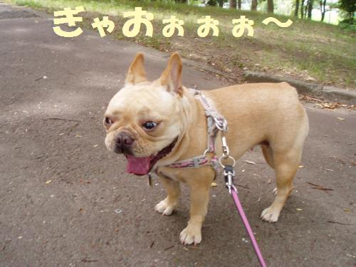 002_convert_20110804140927.jpg