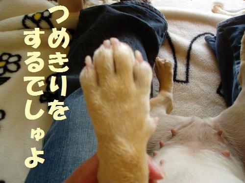 003_convert_20110527155827.jpg