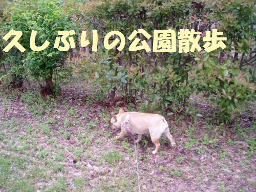 003_convert_20110614010753.jpg