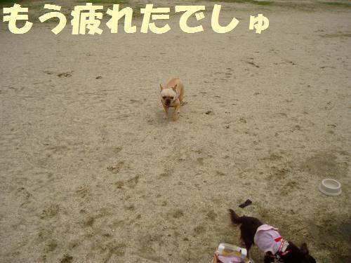 004_convert_20110526135643.jpg