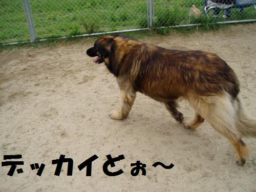 004_convert_20110606133427.jpg