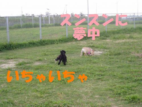 004_convert_20110730024222.jpg