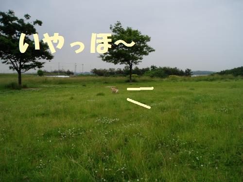 005_convert_20110603004913.jpg