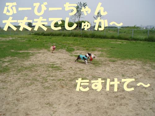 005_convert_20110604011900.jpg