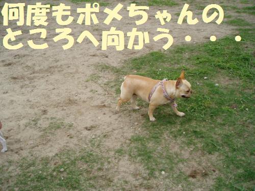 005_convert_20110606133459.jpg