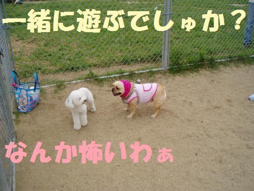 005_convert_20110610232238.jpg
