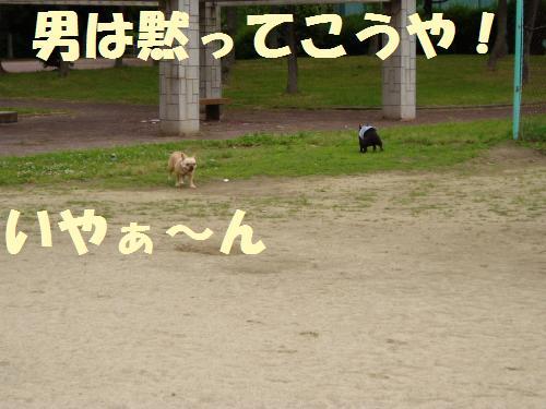 006_convert_20110526135812.jpg