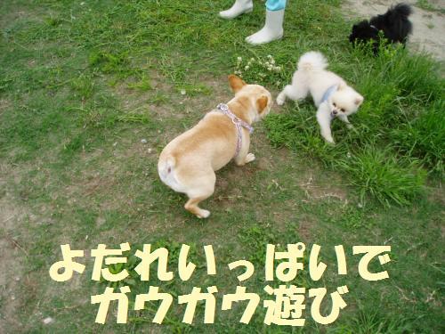 006_convert_20110606133536.jpg