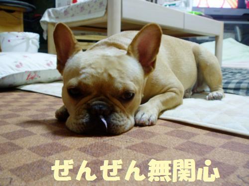006_convert_20110811124631.jpg