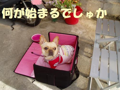 008_convert_20110523141804.jpg