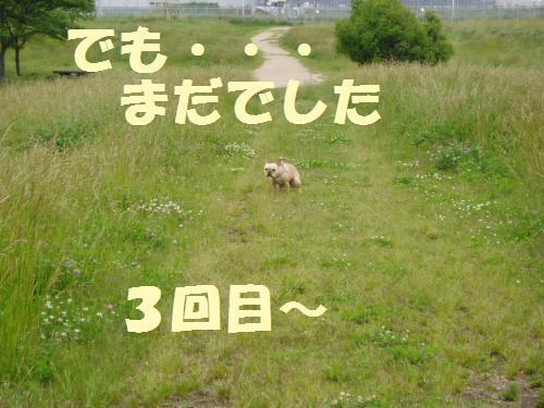 008_convert_20110603005057.jpg