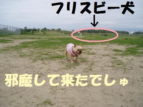 008_convert_20110610232435.jpg