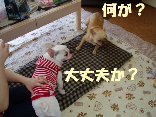 008_convert_20110624002144.jpg