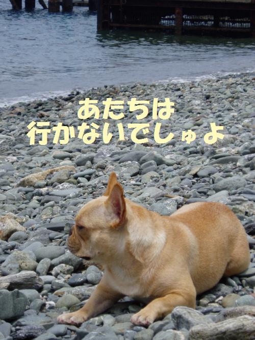 008_convert_20110706125506.jpg