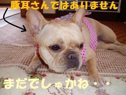 008_convert_20110709105724.jpg