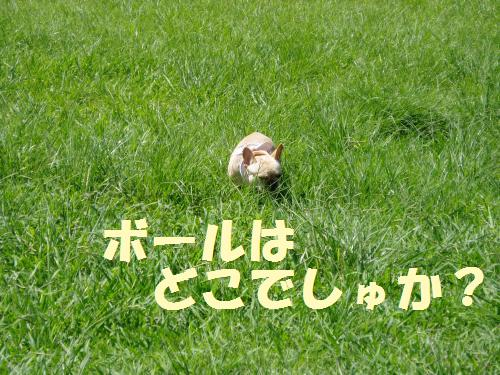 008_convert_20110909000328.jpg