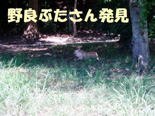 009_convert_20110909000400.jpg