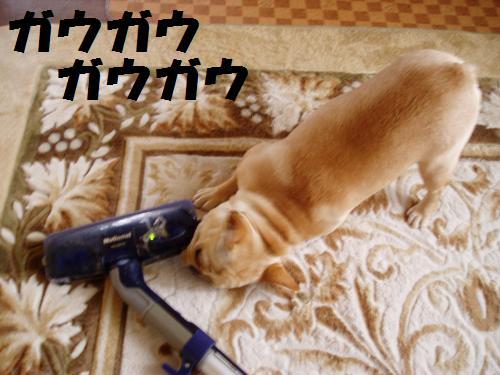 010_convert_20110527160322.jpg