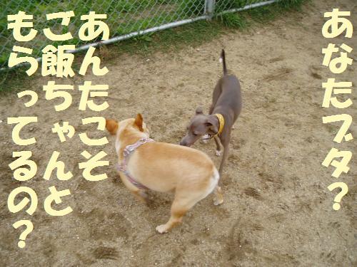 011_convert_20110603005236.jpg