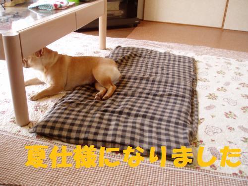 011_convert_20110606133712.jpg
