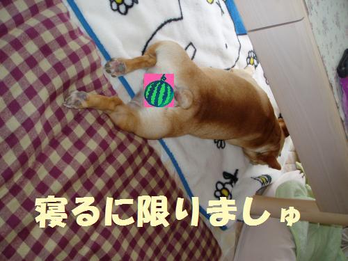 011_convert_20110719122154.jpg