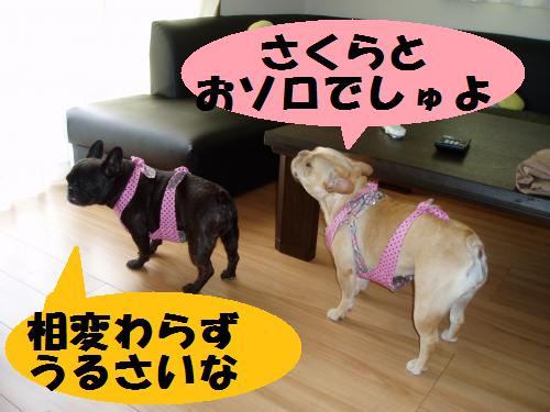 013_convert_20110709110013.jpg