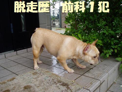 013_convert_20110804141634.jpg