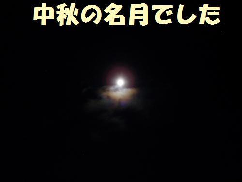 013_convert_20110912231825.jpg