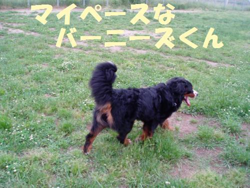 015_convert_20110603005451.jpg