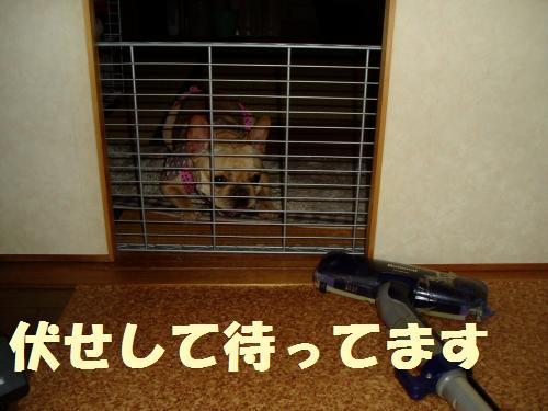 015_convert_20110721150430.jpg