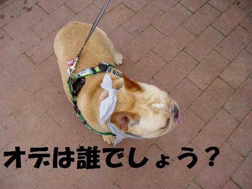 016_convert_20110610232953.jpg