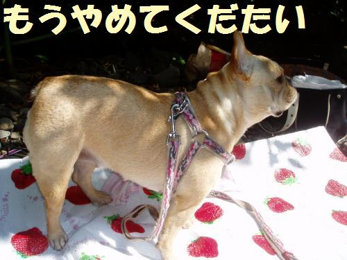 019_convert_20110630002902.jpg
