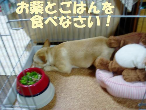 024_convert_20110802004041.jpg