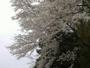 2012_0410ky1_co.jpg