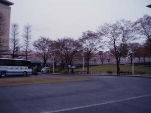 20110419県民会館前の桜