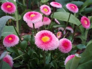 20110422お花1
