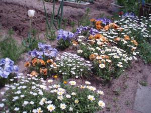 20110503庭の花