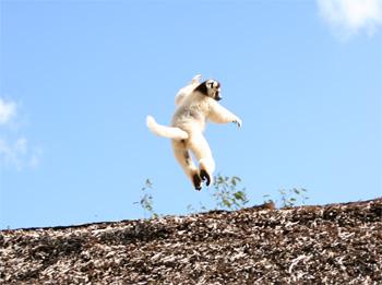空飛ぶシファカ<br /><br />