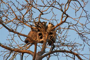 樹上のマキ