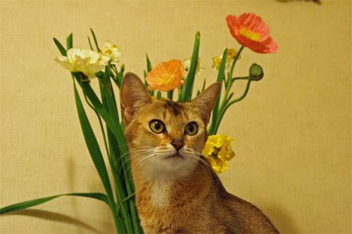アビと花束
